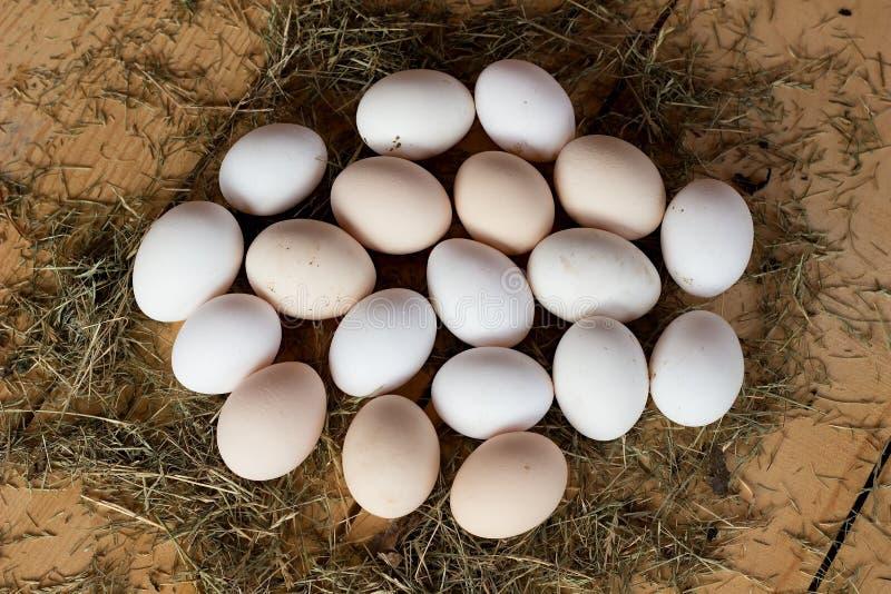 Jajka obrazy stock