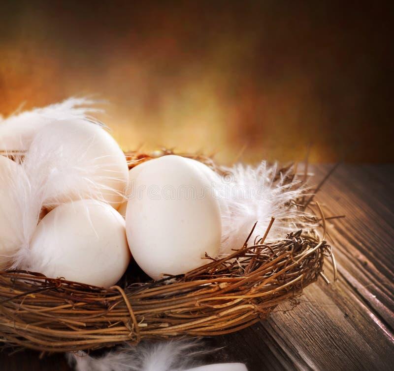 jajka gniazdeczko obraz stock