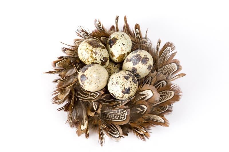 jajka gniazdeczko obrazy stock