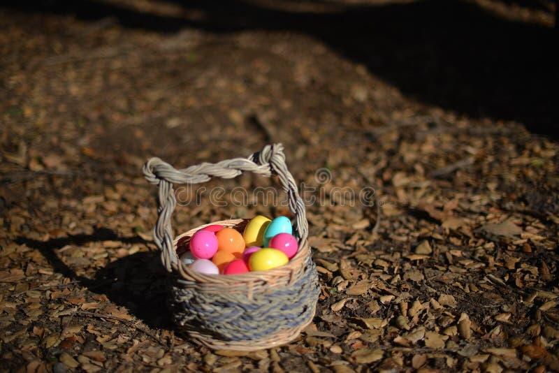 Jajka w koszu obrazy stock