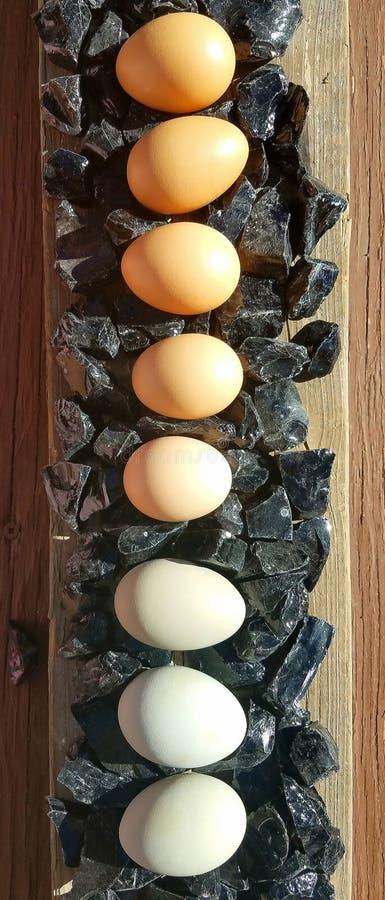Jajka w linii obrazy stock