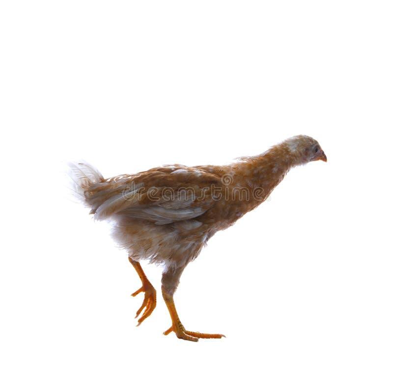 Jajko kurna pozycja z jeden nogą odizolowywającymi na whtie plecy odprowadzeniem lub fotografia royalty free