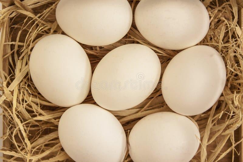Jajko na sianie zdjęcie stock