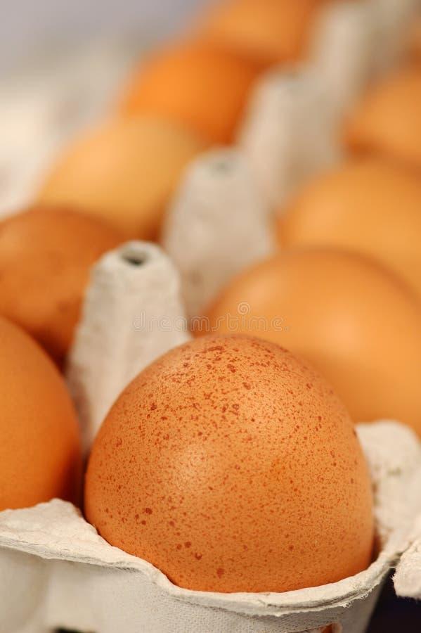 jajko pakiet zdjęcie stock
