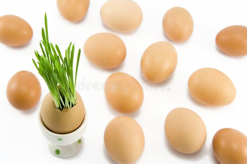 Jajko w filiżance zdjęcie royalty free