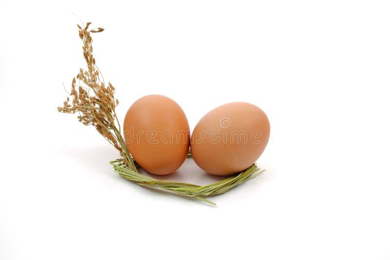 Jajko w wysuszonym trawa kwiacie zdjęcie stock