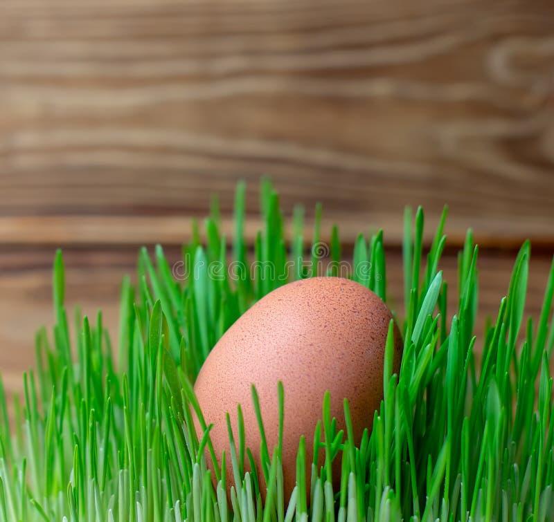 Jajko w zielonej trawy sprawności fizycznej Wielkanocnej diety zdrowej diecie obrazy stock