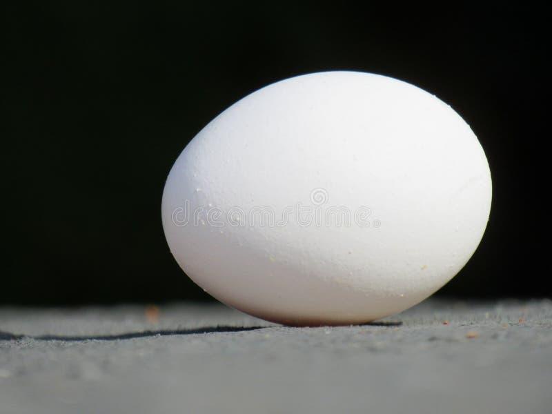 Jajko Wystawiał w Czarnym tle ciska cień na ziemi zdjęcie royalty free