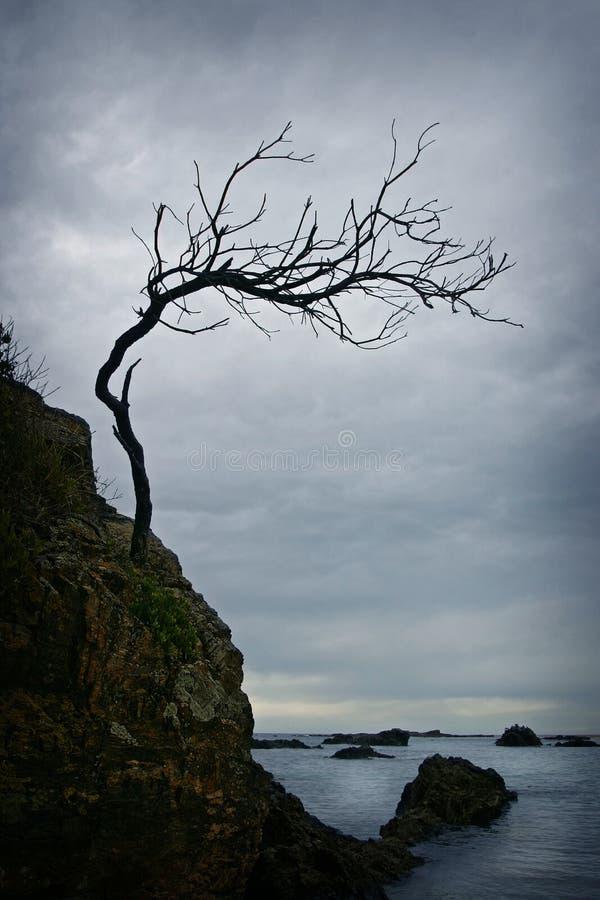 jak działa pokręcony drzewo. zdjęcia stock