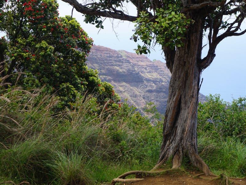 jak działa pokręcony drzewo obraz royalty free
