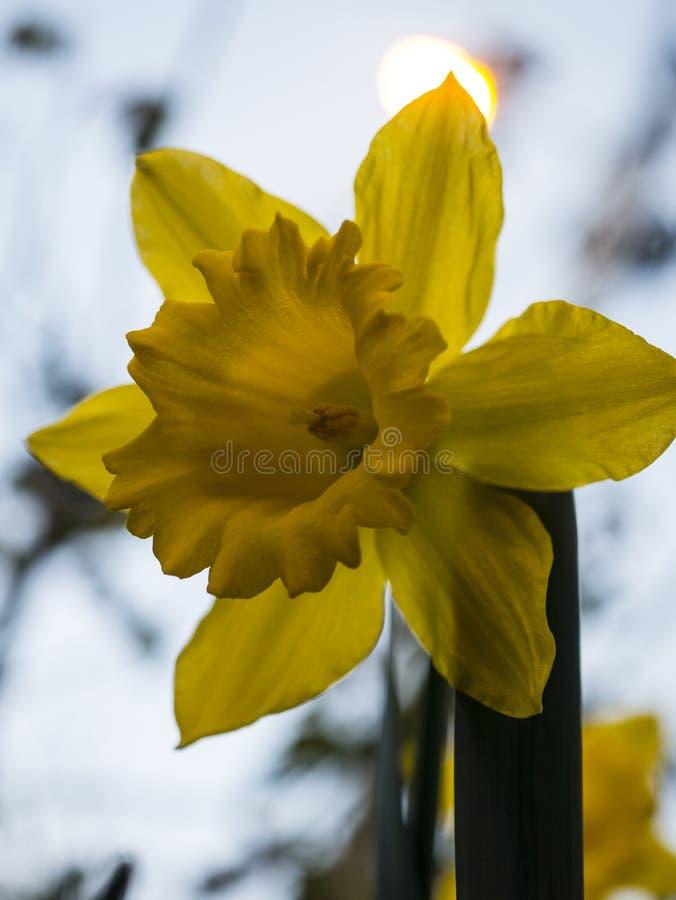 Jak jaskrawy żółty słońce fotografia stock