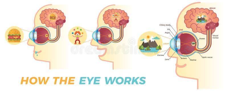 Jak oko pracuje ilustracji