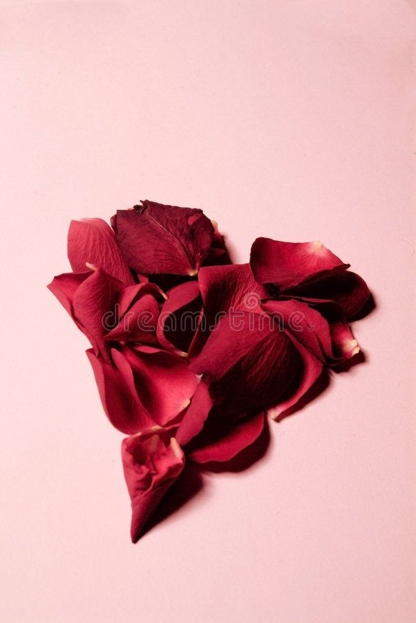 jak płatek róży kształtował serce zdjęcia royalty free
