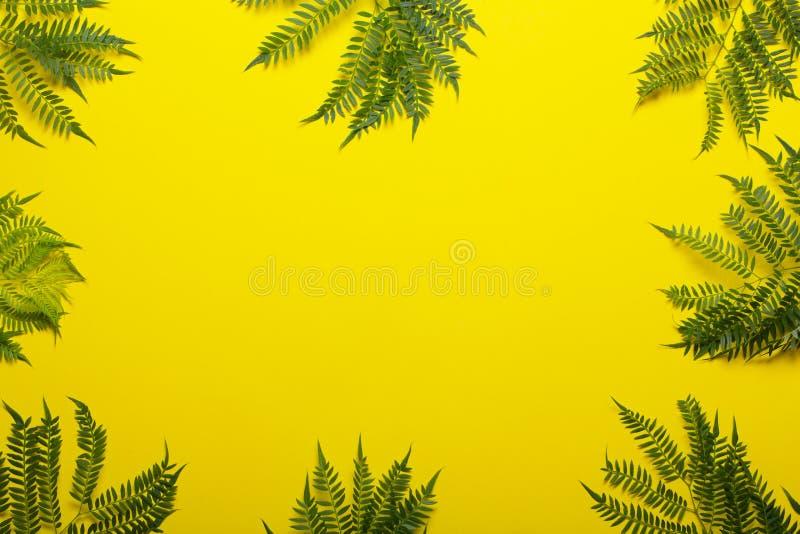Jakaranda filial på en gul bakgrund idérik bild royaltyfria foton