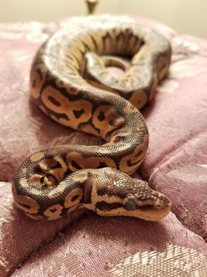 Jake змейка стоковое фото rf