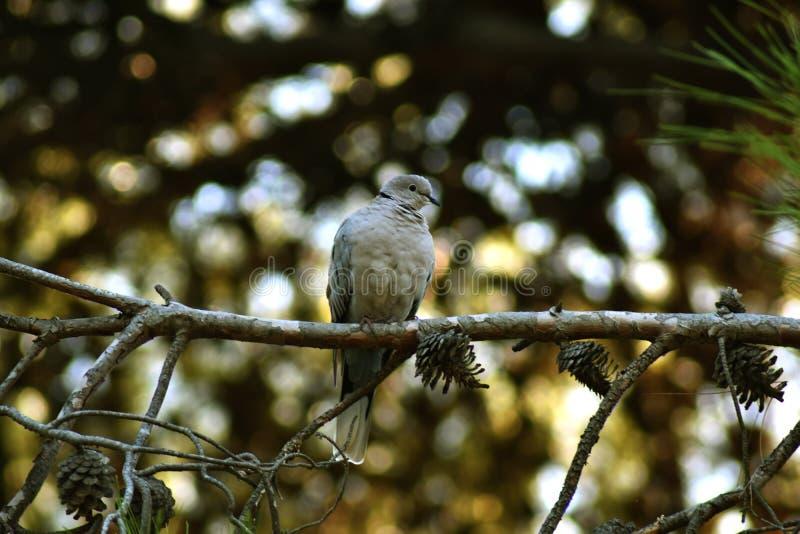 Jaki uroczy gołąbka ptak fotografia stock
