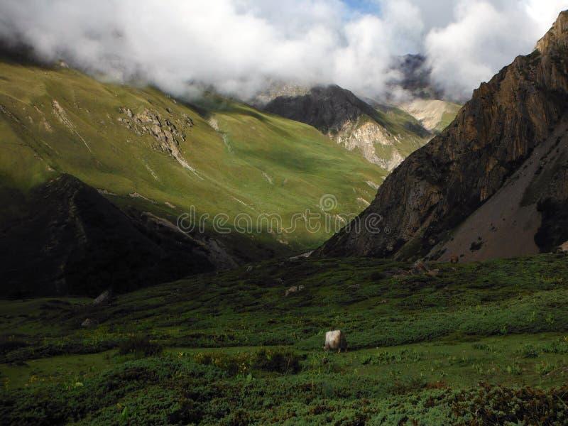 Jakken op een Himalayan-Landschap tijdens Moesson stock foto