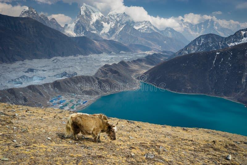Jakken op Gokyo Ri, Everest-gebied, Nepal royalty-vrije stock afbeelding