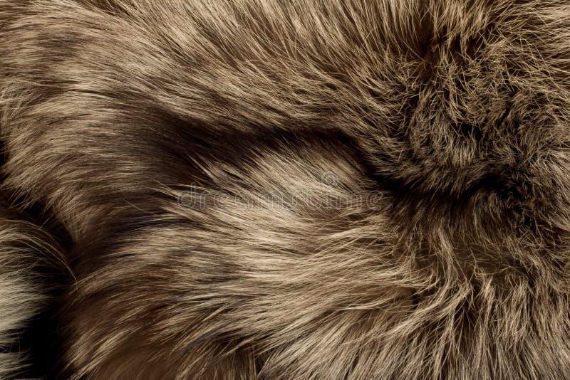 jako lisa futerka biegunowa tekstura pożytecznie obrazy royalty free