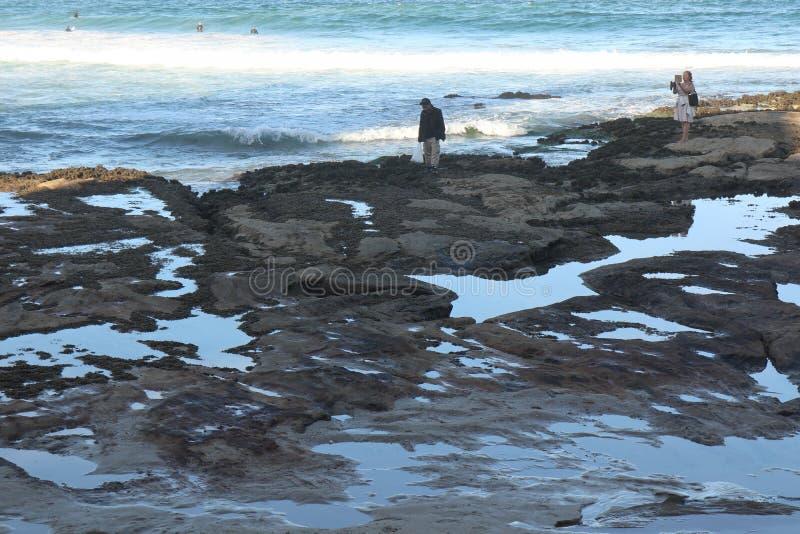 Jakt för Cronulla strand-Enskatt på kusten arkivfoton