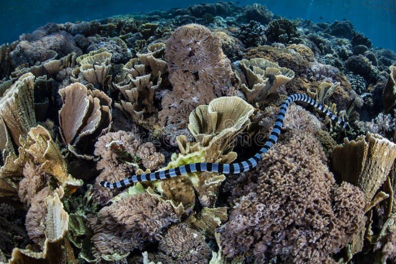 Jakt för havsorm arkivbild