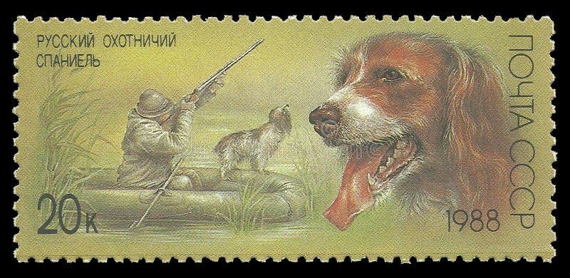 Jakthundkapplöpning, rysk spaniel royaltyfria bilder