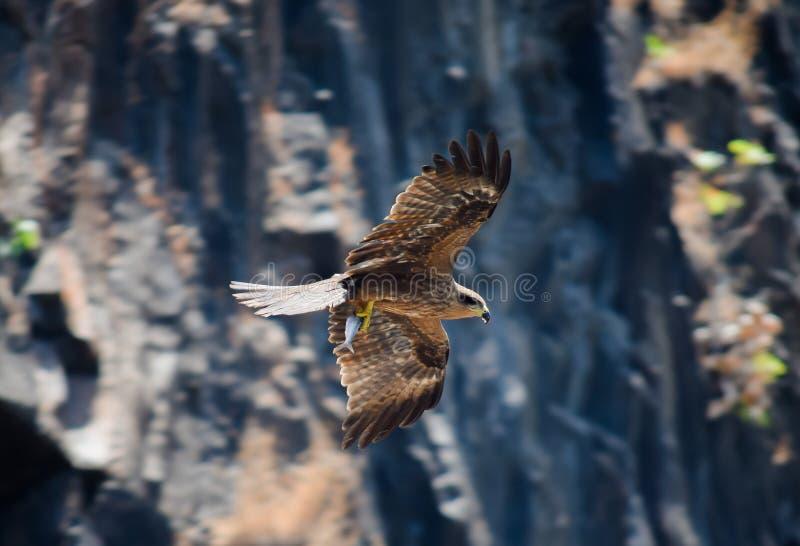 Jaktmästerverk fotografering för bildbyråer