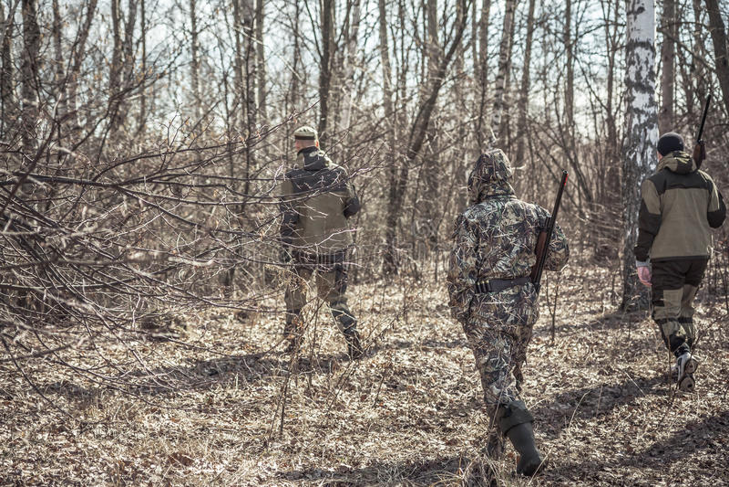 Jaktplats med gruppen av jägare i kamouflage som går i vårskog med torra sidor under jaktsäsong arkivfoto