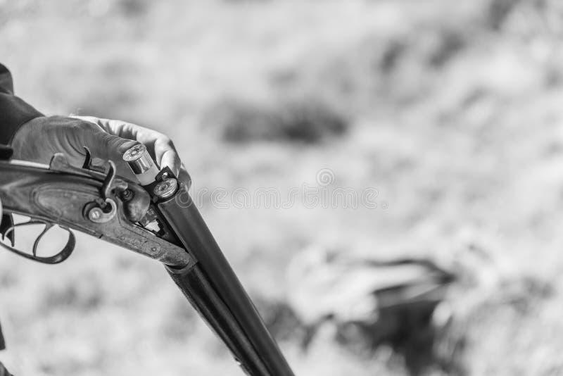 Jaktsäsong Jägaren utrustar den retro dubbelpipiga hagelgeväret med kassetter, slut upp royaltyfri foto