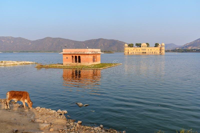 Jal Mahal es palacio del agua en el hombre Sagar Lake en Jaipur La India imagen de archivo libre de regalías