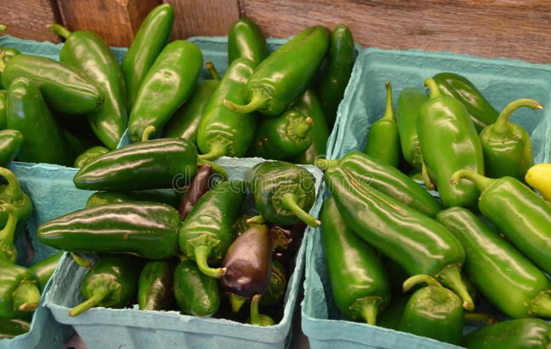 Jalapeno Peppers. For sale at the outdoor farm market royalty free stock photography