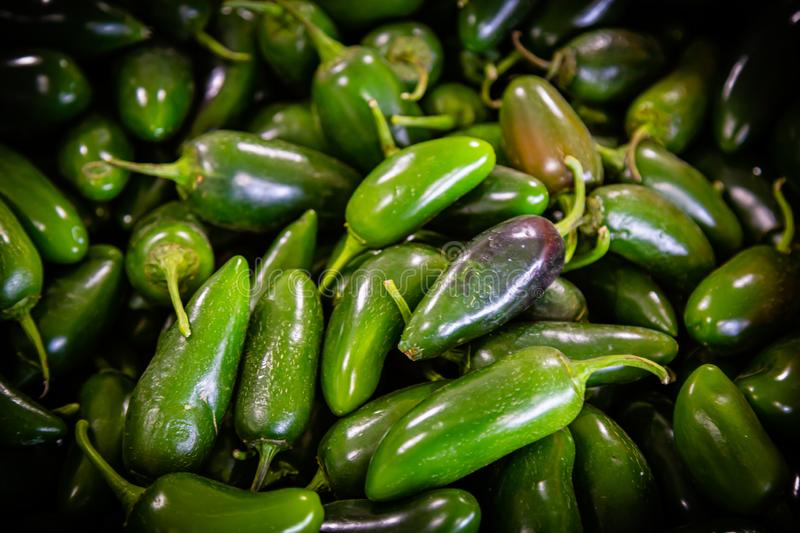 Jalapeno sweet and chili peppers Capsicum annuum ` stock photos