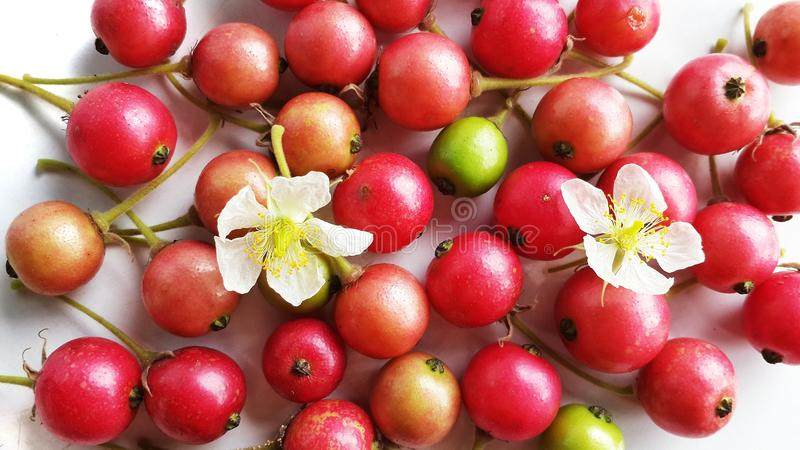 Jam tree berry stock photo image of berry flower fruit 43211114 download jam tree berry stock photo image of berry flower fruit 43211114 mightylinksfo Gallery
