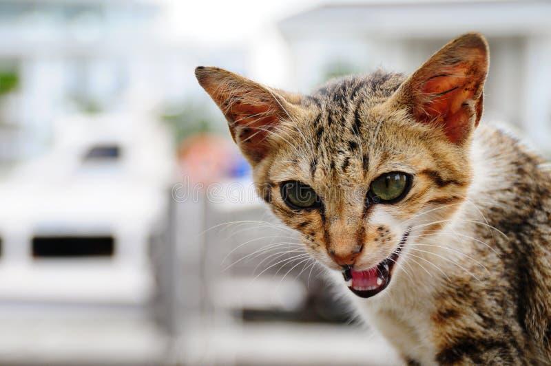 Jama för katt royaltyfri bild
