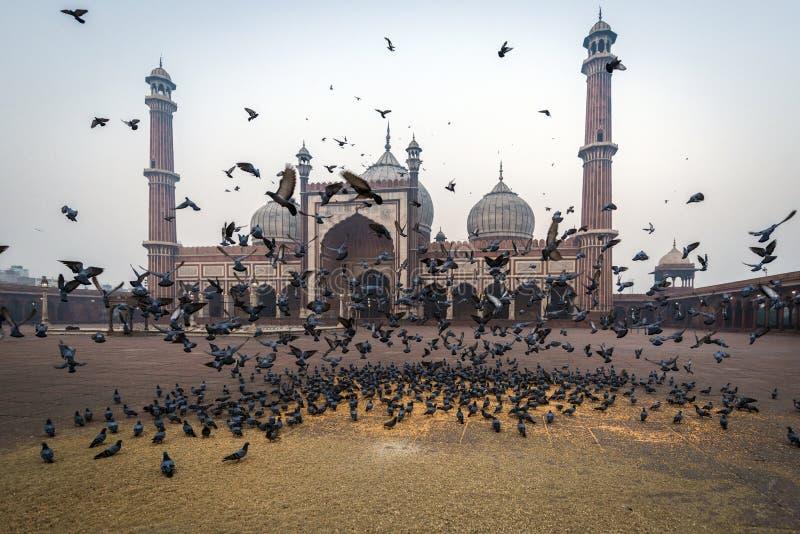 Jama Masjid, Delhi, India. View of Jama Masjid Mosque, Delhi, India stock images