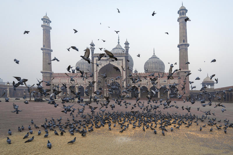 Jama Masjid, Delhi, Indien stockfoto