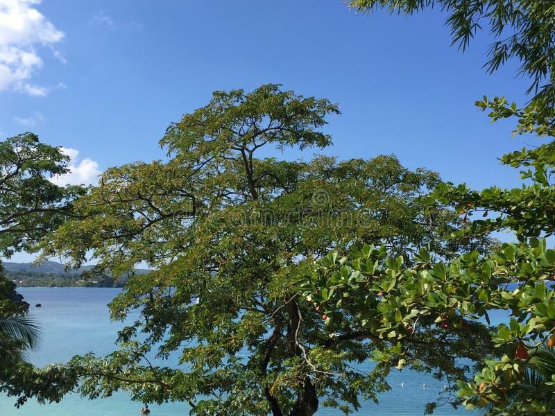 jamaica fotografia stock libera da diritti