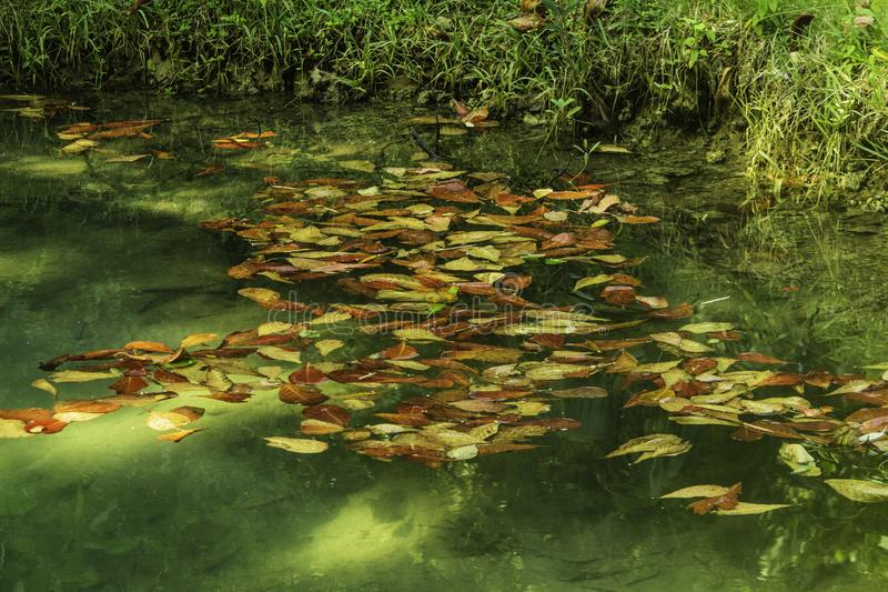 Leaves In The Water In Jamaica. These fallen leaves in this tropical setting brightens the water. It`s simple, but the colors of yellow and an orange added to stock images
