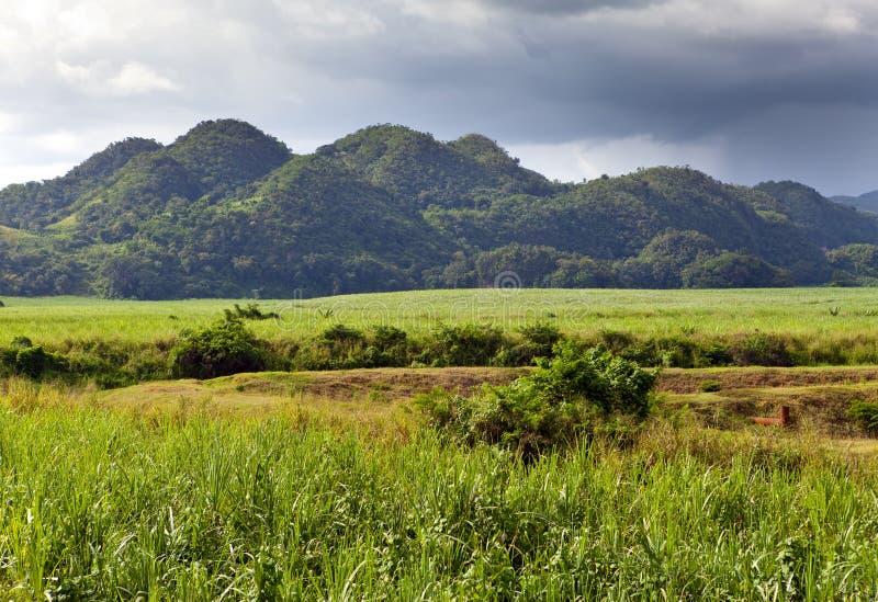 Jamaica.nature an einem Fuß des Nassau-Berges stockbilder