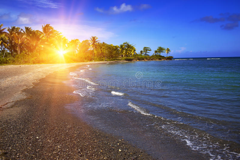 Jamaica. Sandy coast of a bay and palm tree.  stock images