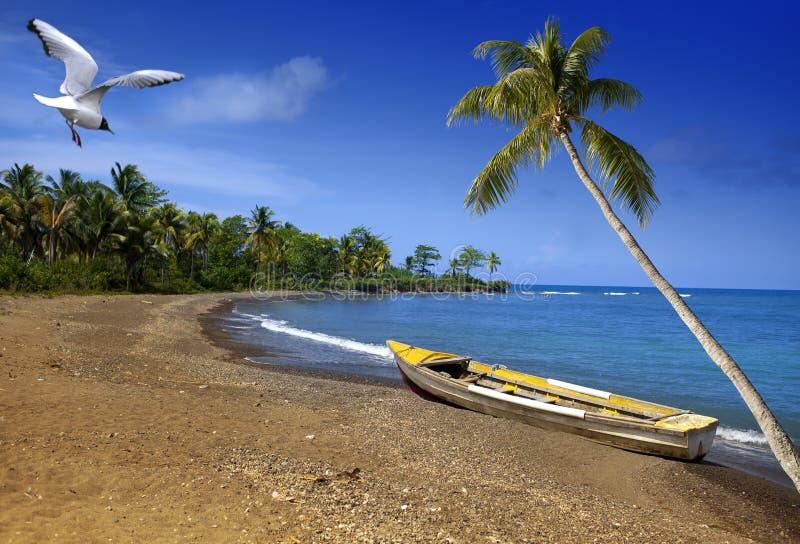 jamaica Una barca sulla costa sabbiosa di una baia fotografia stock