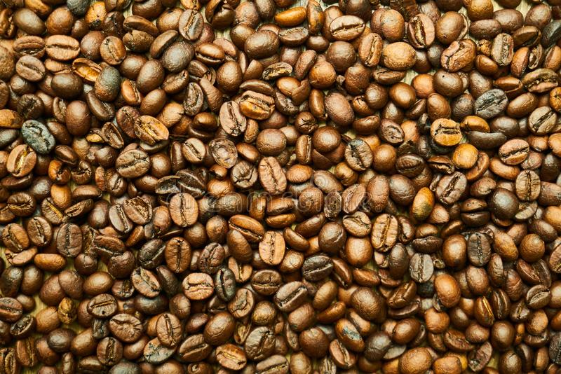 Jamaican Blue Mountain Coffee, Nuts & Seeds, Commodity, Seed royalty free stock photo