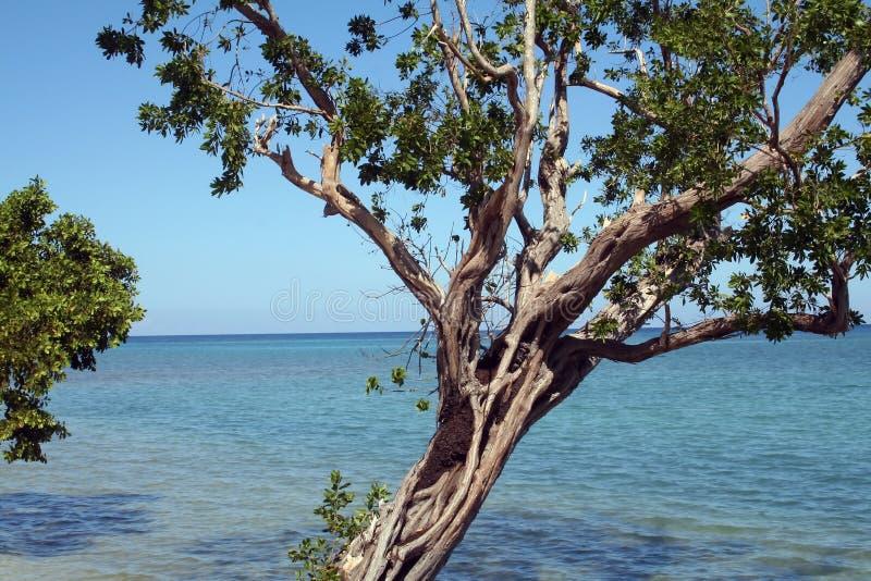 Jamaika-Küstenlinie stockfotografie