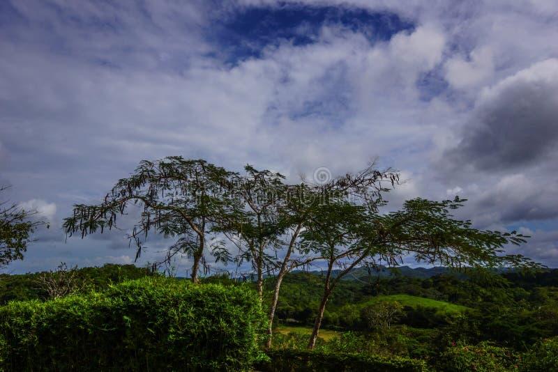 Jamaikanische Wolken stockbilder