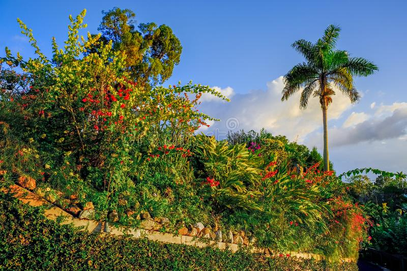 Jamaikanischer Steingarten lizenzfreies stockfoto