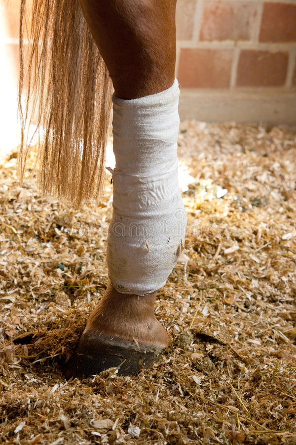 Jambe reliée de chevaux photographie stock libre de droits