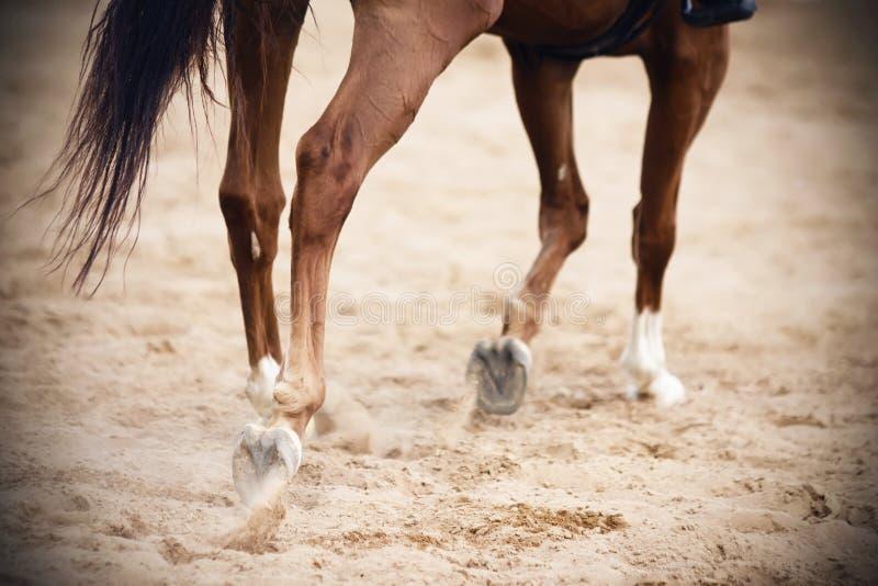 Jambes d'un cheval de baie, qui galope sur une arène arénacée photos libres de droits
