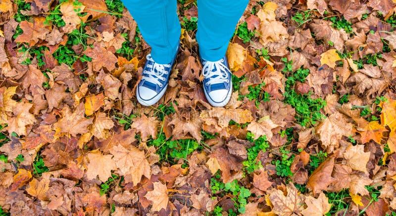 Jambes dans les blues-jean et des chaussures d'espadrille se tenant sur les feuilles d'automne jaunes sèches, vue supérieure image stock