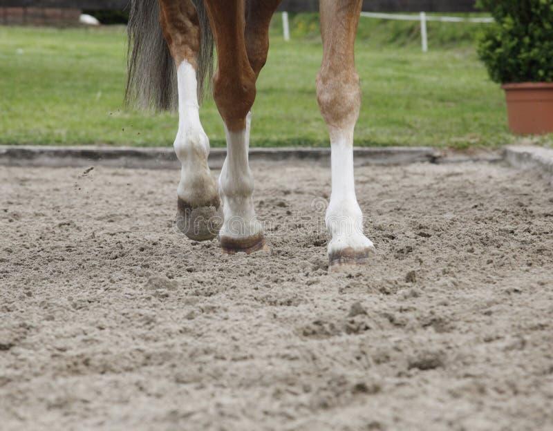 Jambes de cheval image libre de droits