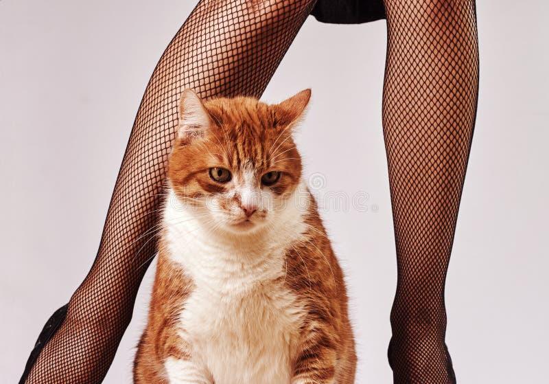 jambes de femme et chat de gingembre photos stock